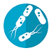 Darmaufbau nach Antibiotika